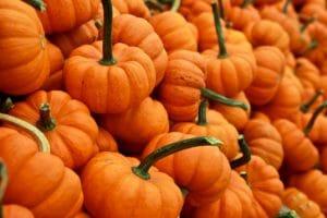 Big pile of orange pumpkins
