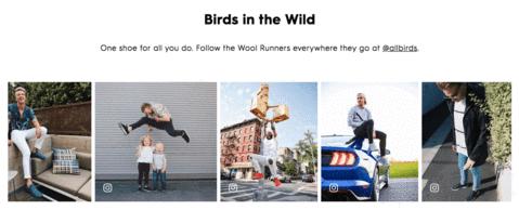 Allbirds user generated pictures DTC website
