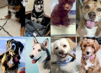 hawke-media-voted-the-#1-best-workplace-for-dogs-(by-dogs)-in-america- -blog- -hawke-media