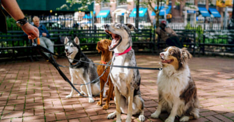 pet-industry-growth,-statistics-&-trends:-a-definitive-ecommerce-market-report