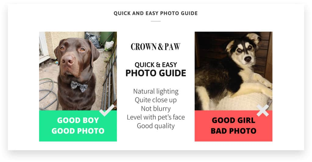 Crown & Paw Online Pet Retailer Product Page Example